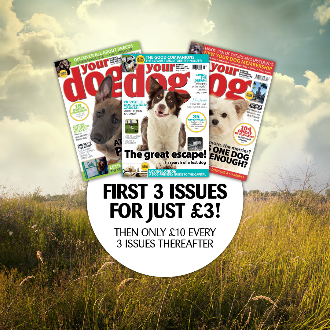 Your Dog magazine promo code discount