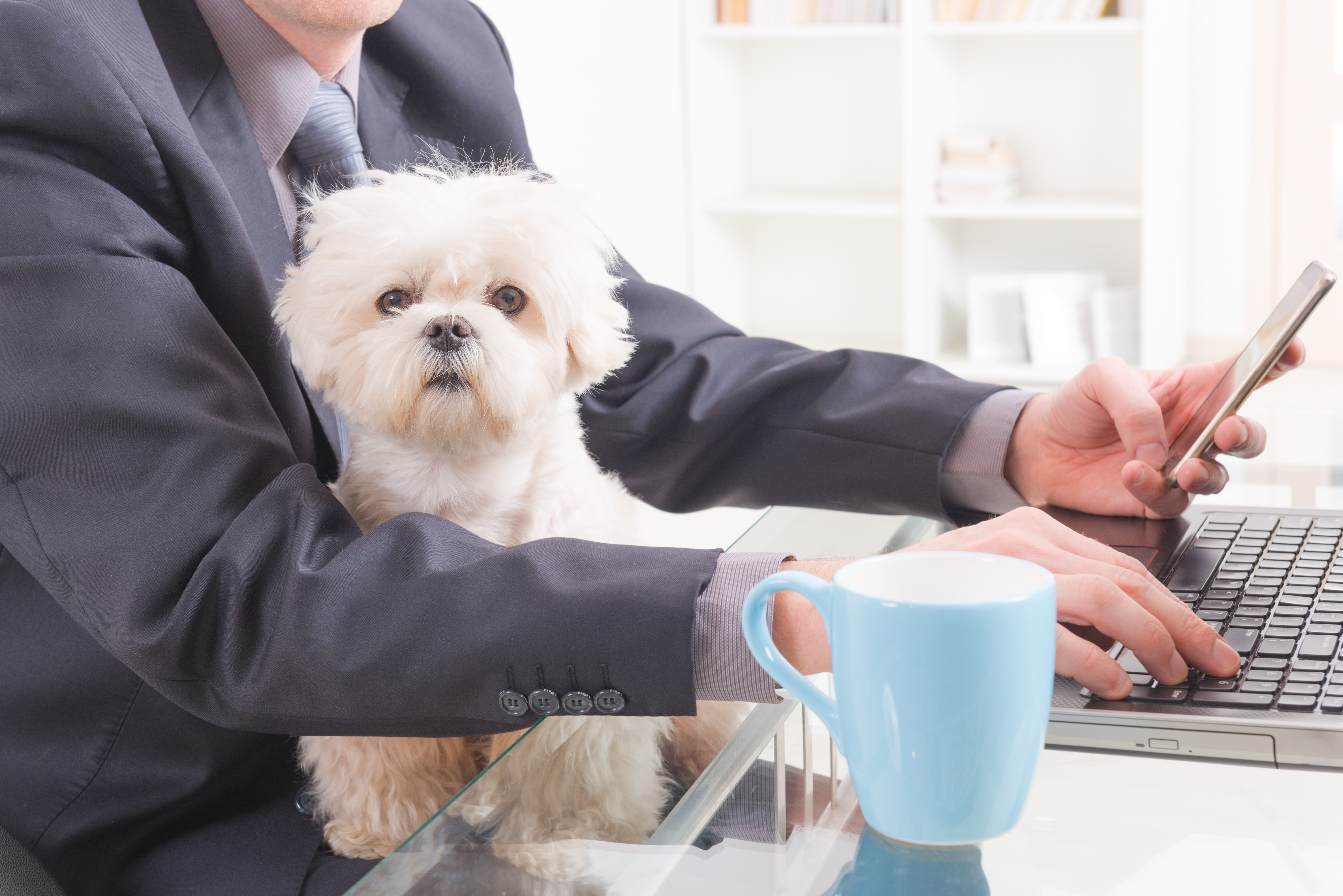 Bring Your Dog to Work Day Blog