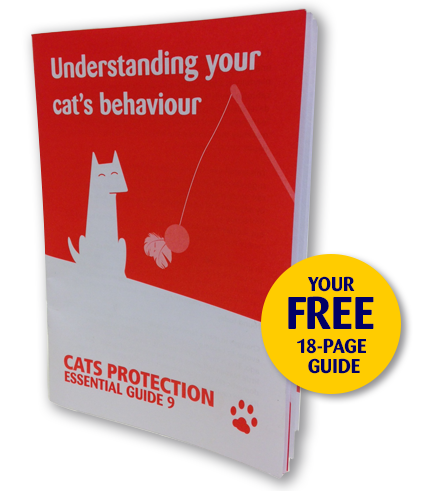 Cats Protection Guide to Understanding Cat Behaviour