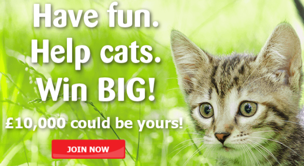 Win £10,000 top prize in Cats Protection lottery