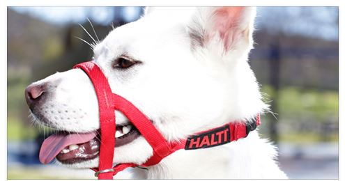 Free Halti lead and £10 voucher