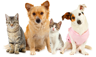 Free Pet Stuff & discounts for Cats n Dogs