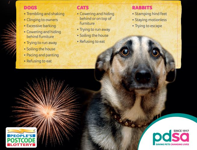 Free PDSA Fireworks Top Tips Guide for calming pets