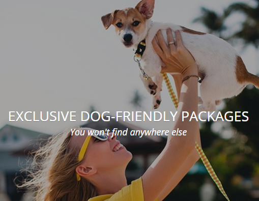 Exclusive Pets Pyjamas dog friendly holiday offers