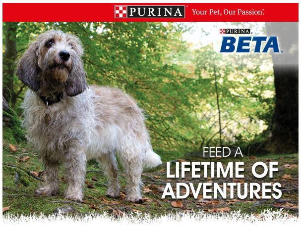 Purina Beta free dog food sample