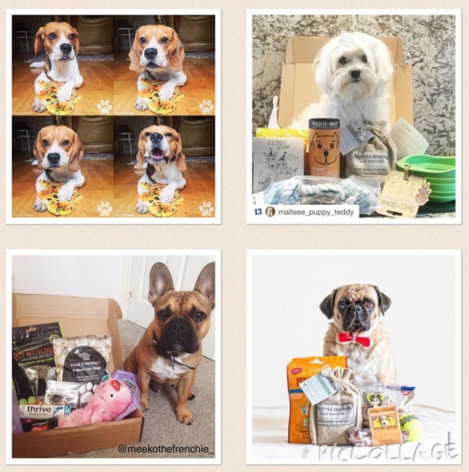 The Tailwagger Pet Treat Box Discount Code