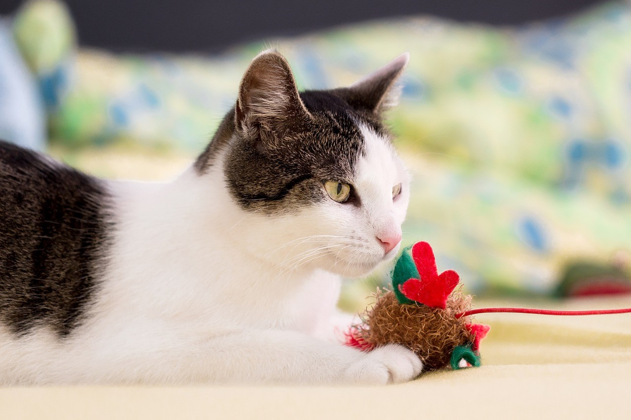 Homemade christmas gifts for cats